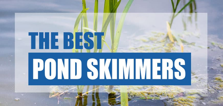 best pond skimmer