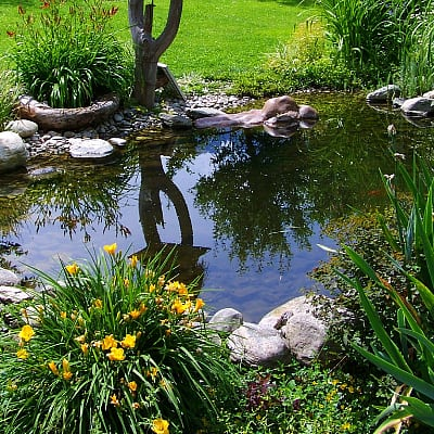 benefits of fish pond liners