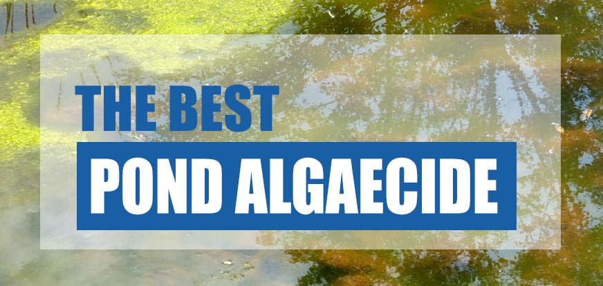 best pond algaecide