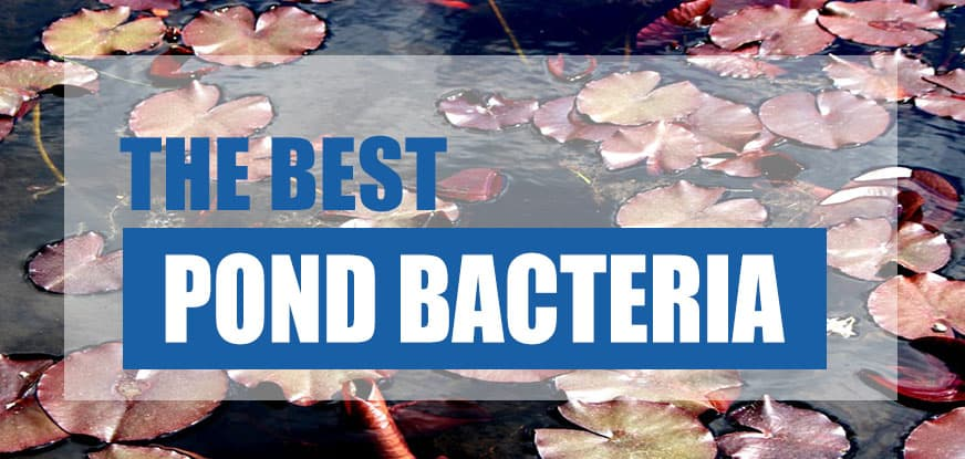 best beneficial bacteria for ponds