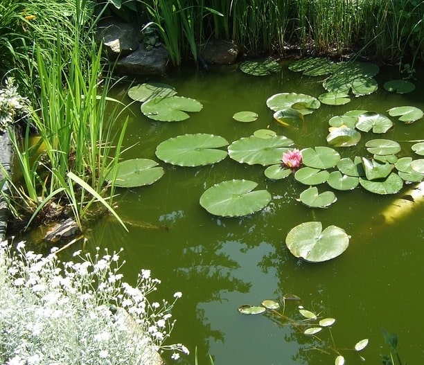 How to cycle a pond for fish step by step guide pond for What fish should i put in my pond