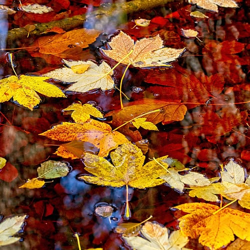 leaves add tannins to water
