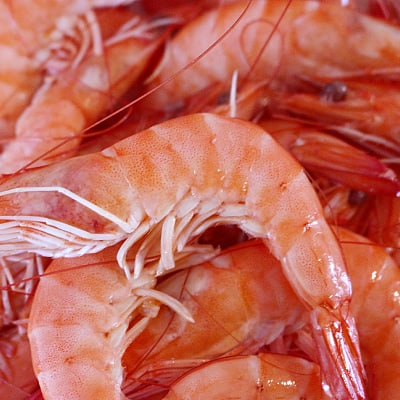 shrimp meal best protein sources for fish