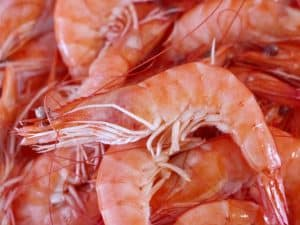 Shrimp and krill provide the best natural protein sources for fish