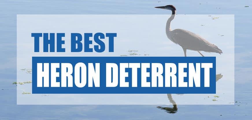 Best Heron Deterrent for Ponds 2019 (Cheap & Easy Methods