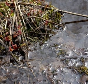 Excess debris and sludge create smelly pond water