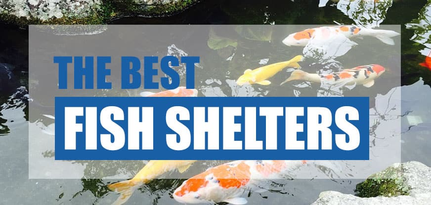 best pond fish shelter