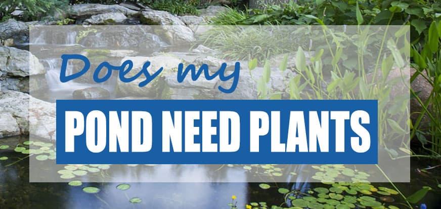 pond need plants