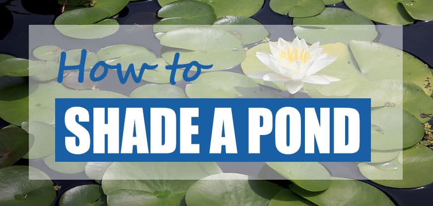 how to shade a garden pond