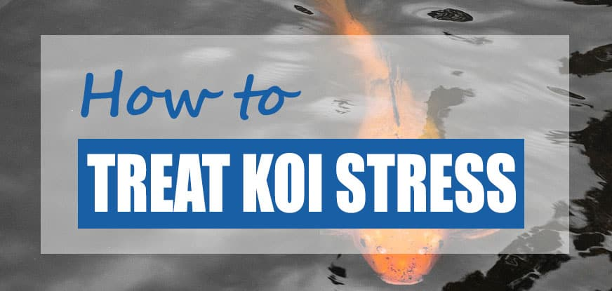 koi stress treatment