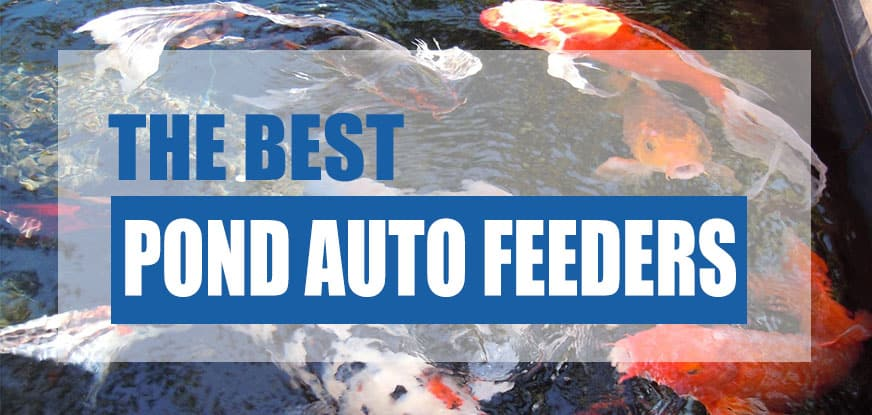 watch fish feeders ponds for programmable hqdefault all pond feeder solutions automatic fully youtube