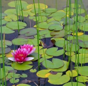 how to aerate ponds with plants