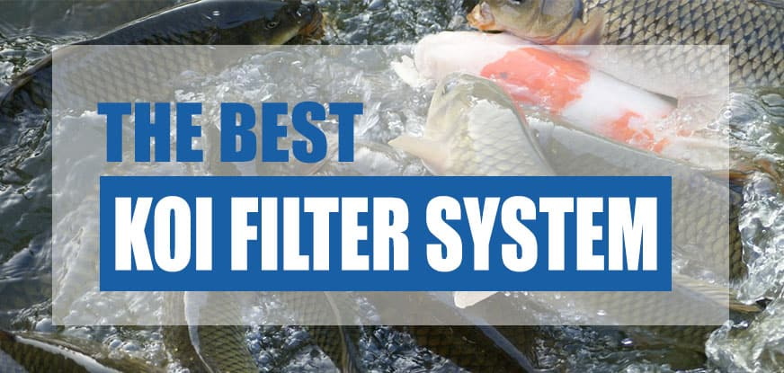 best koi pond filter system
