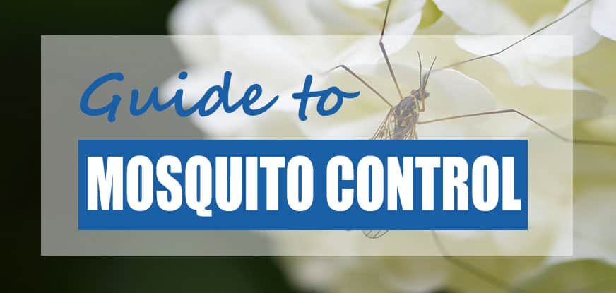 How to Get Rid of Mosquito Larvae in Ponds