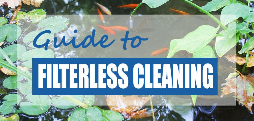 How To Keep A Pond Clean Without A Filter Step By Step