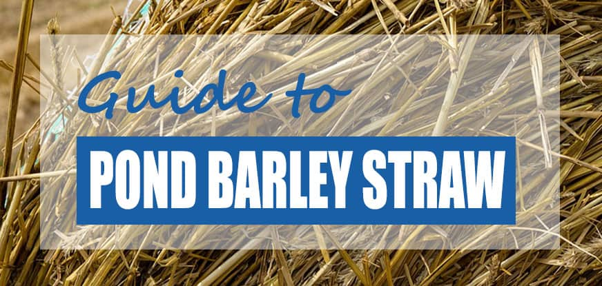 How to Use Pond Barley Straw