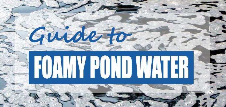 Why is my Koi Pond Foamy