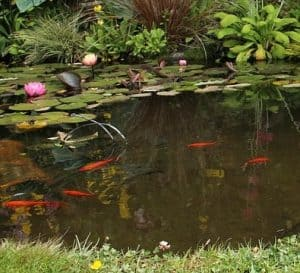 why is pond water level important