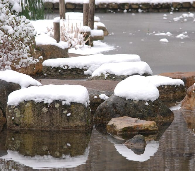 When to start feeding koi after winter best spring foods for Starting a koi pond