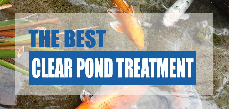 Best Clear Pond Water Treatment