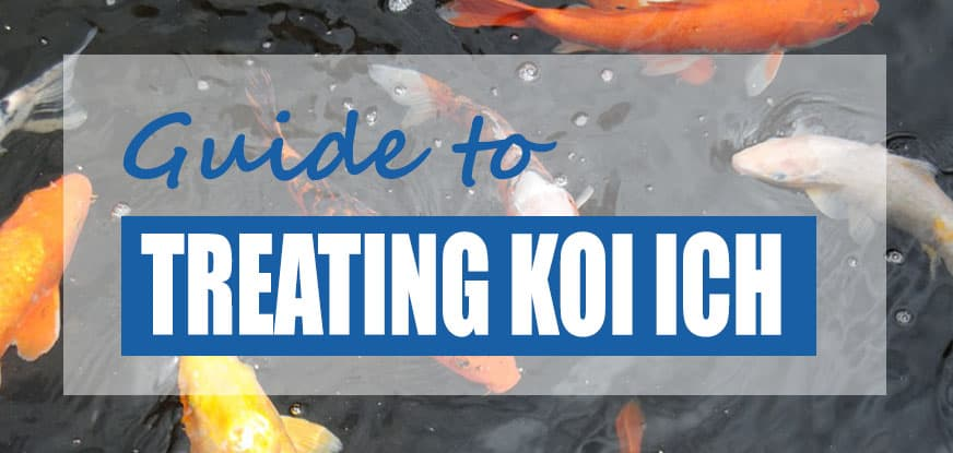 Koi ich treatment guide fish safe methods pond informer for Koi treatment