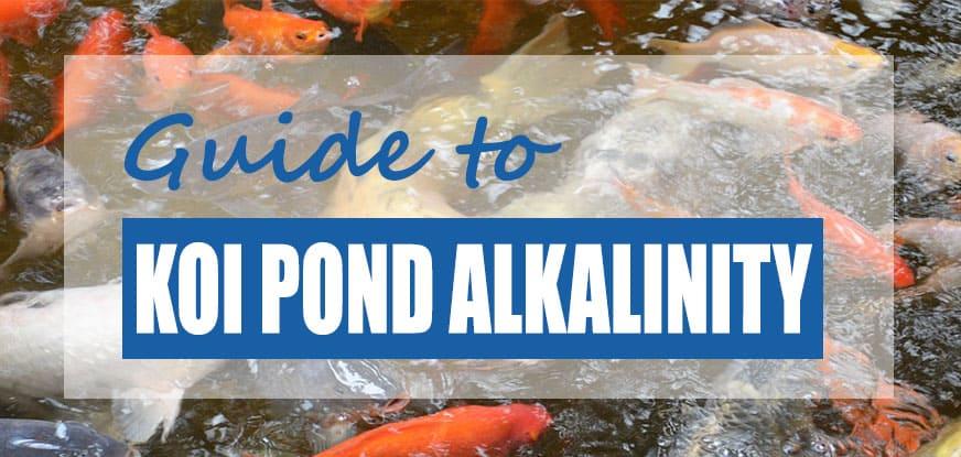 Koi Pond Alkalinity