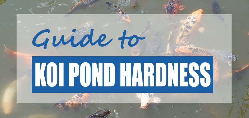 Koi Pond Water Hardness