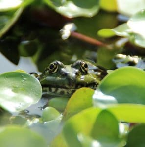 plants clean water and provide nutrients for ponds