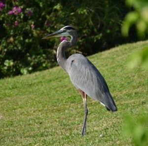 how to deter herons