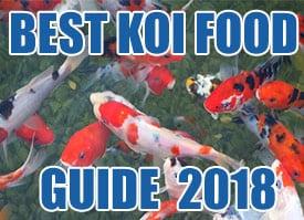 Koi pond winter care guide safe winterization tips for Koi pond kh level