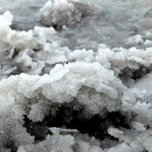 salt kills cattails
