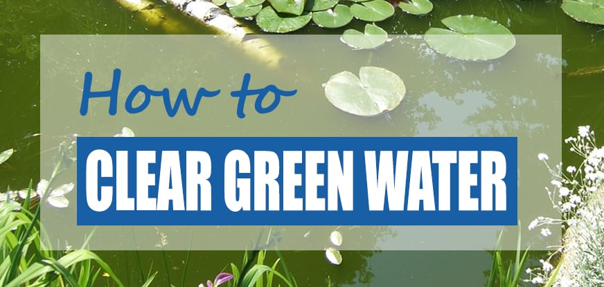 How To Clear Green Pond Water