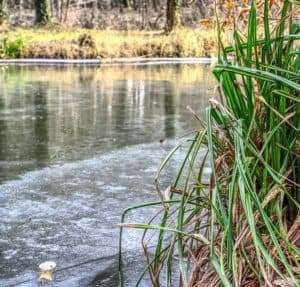 how to keep fish alive in winter