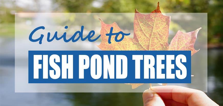 Best Trees to Plant Near Koi Ponds