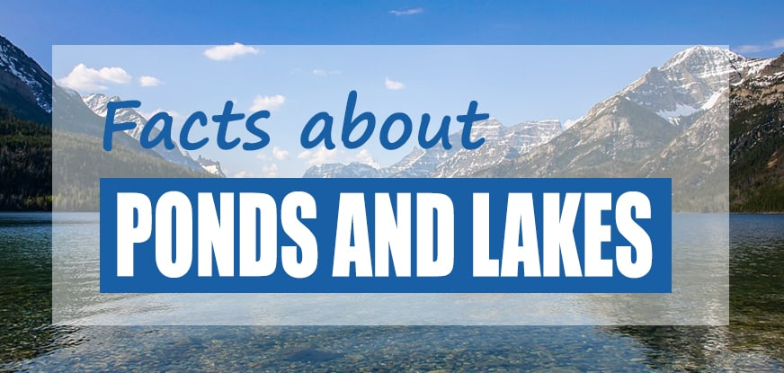 Facts About Ponds & Lakes