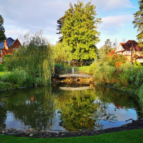 A fish pond with plants around the edges and a bridge