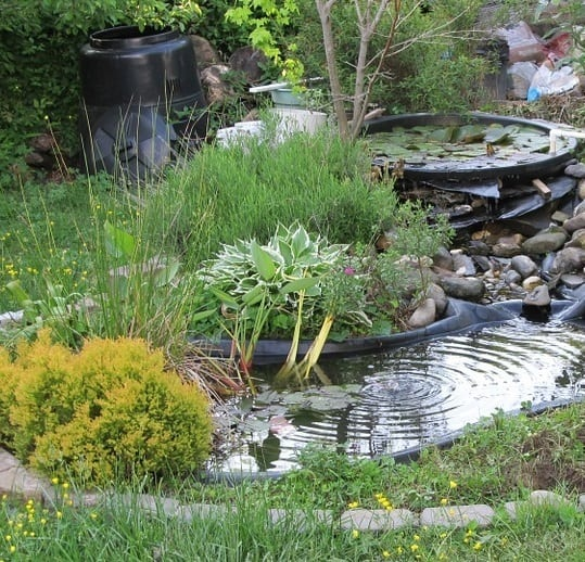 A small wildlife pond for amphibians and birds