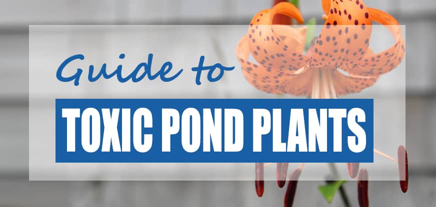 List of Plants Toxic to Pond Fish