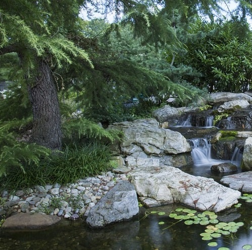 A healthy wildlife pond with trees, shrubs, and aquatic plants