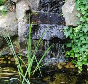 a waterfall in a pond for plecos