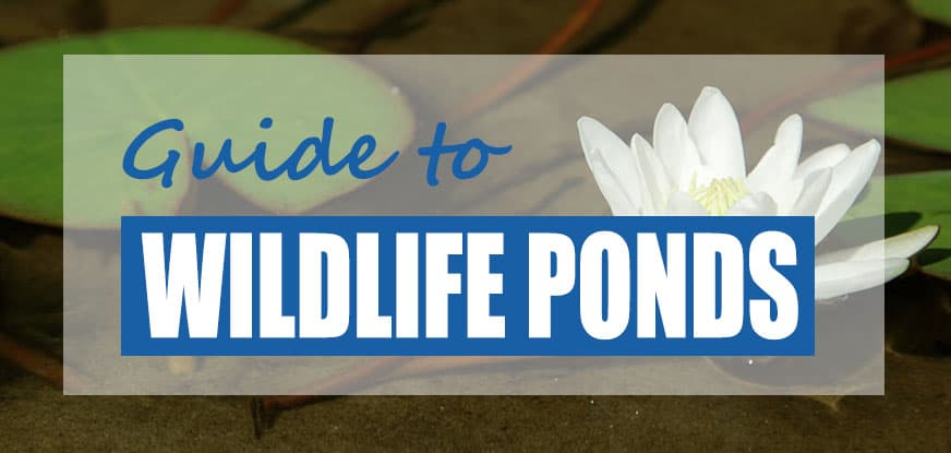Wildlife Pond Maintenance Guide (Cleaning Advice)