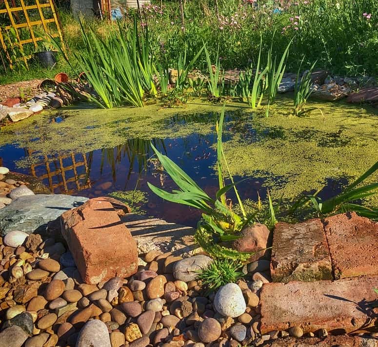 A small wildlife pond that will attract birds, newts, frogs, insects, and plants