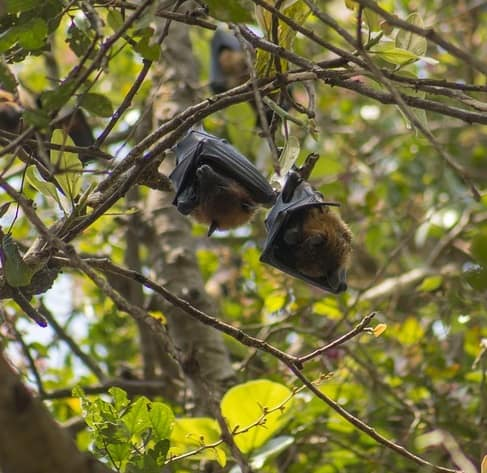 Bats roosting near a pond help control insect populations
