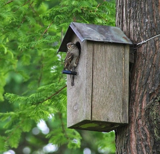 Nest boxes draw songbirds to ponds