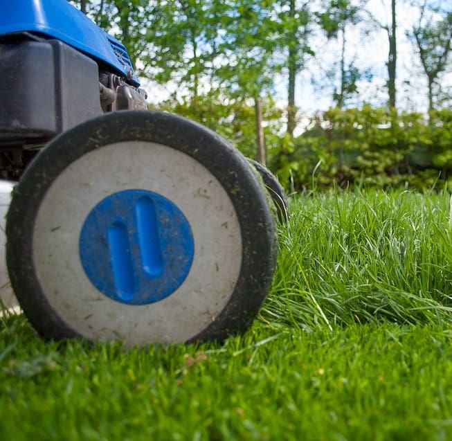 Mowing near ponds damages water quality and scares away wildlife