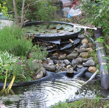 A mini pond can attract wildlife, and be brought indoors for winter