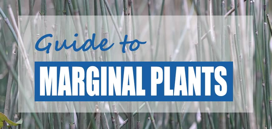 The Best Bog & Marginal Pond Plants