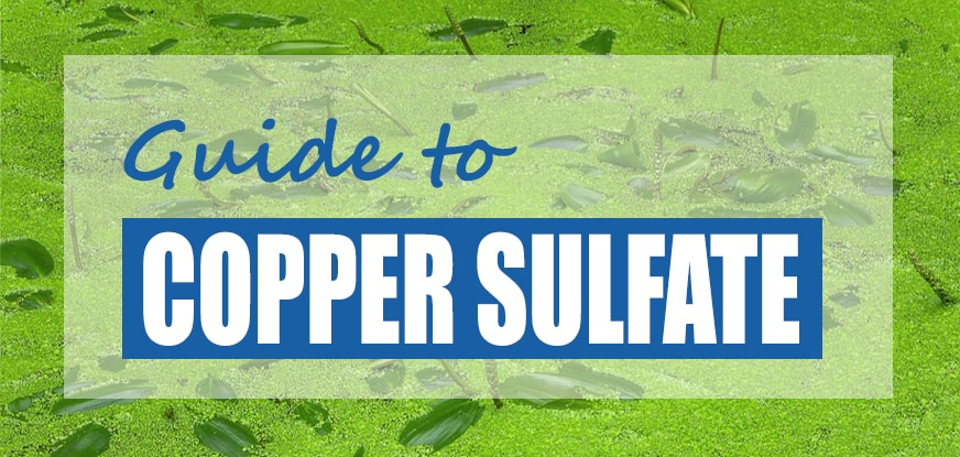Guide to Copper Sulfate for Ponds & Lakes