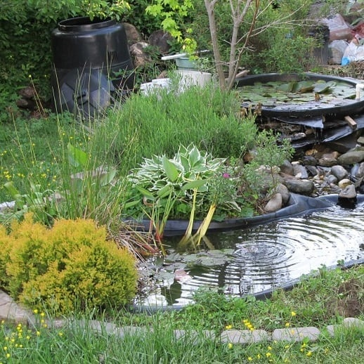 The Best Small Plants For Small Ponds Easy Care Species Pond