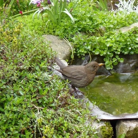 Wildlife Pond Surrounded By Pebbles: The Best Small Plants For Small Ponds (Easy Care Species